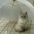 写真: 家猫になりました