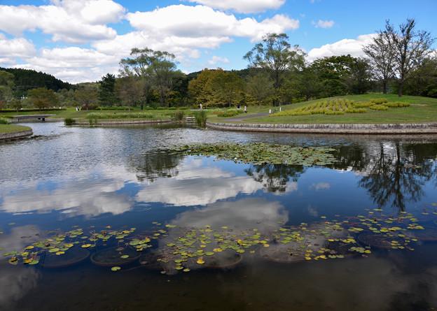 写真: 池の空