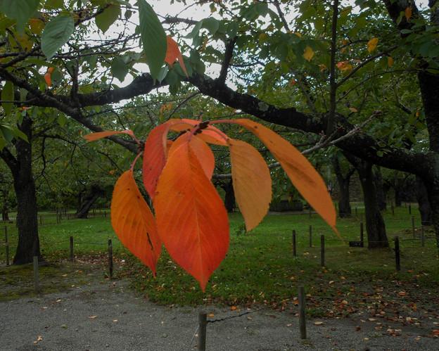 鶴ヶ城の初秋