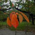 写真: 鶴ヶ城の初秋