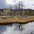 写真: 晴れ行く湿原