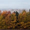 朝霧のカラマツ林