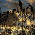 写真: 河川敷の夕暮れ