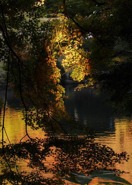 黄金色の光