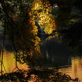 写真: 黄金色の光