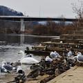 Photos: 冬の河川敷公園