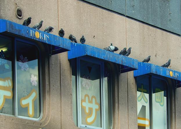 鳩のデイサービス