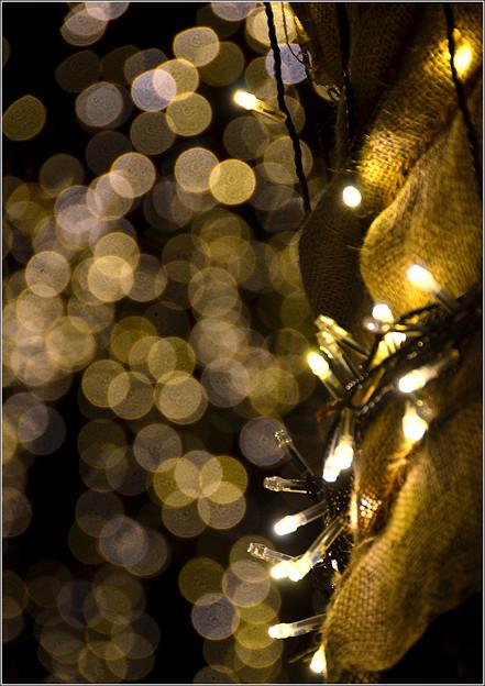 Photos: 優しい灯り