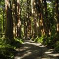 木漏れ日の参道