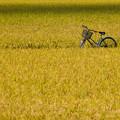 Photos: 忘れられた自転車