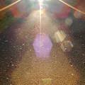 光の散歩道