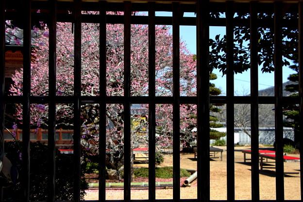 矢掛町 観照寺の梅02