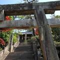 2018 笠岡市 菅原神社の杜若3