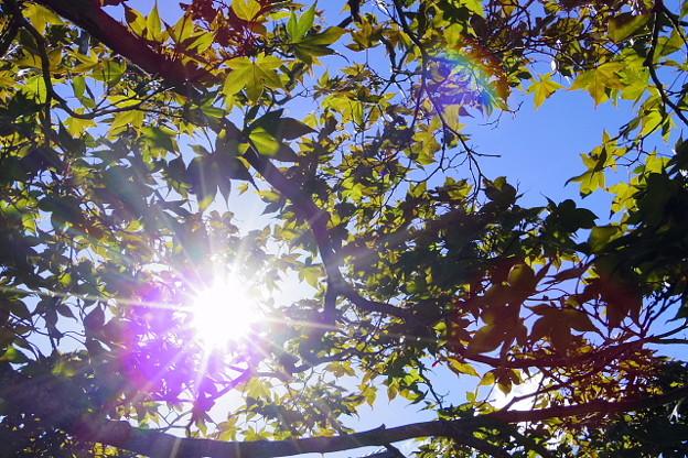 秋というのに