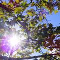 写真: 秋というのに