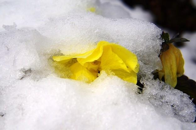Photos: 春雪