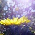 Photos: 春分