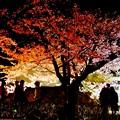 Photos: 桜月夜