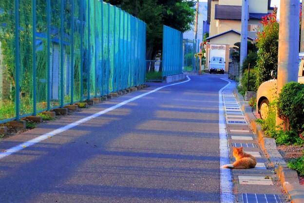 Photos: 朝