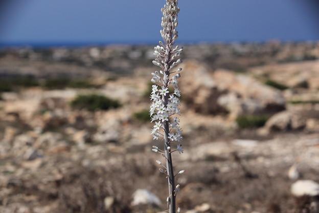 荒涼とした島に咲く花