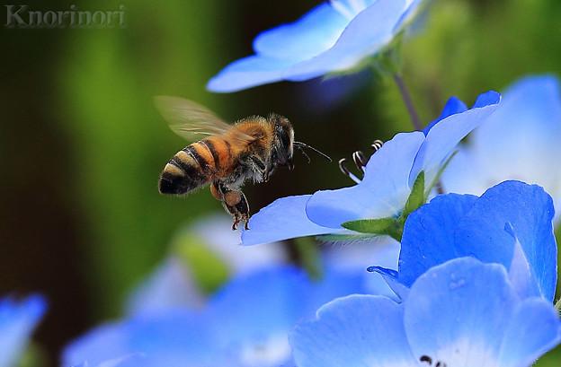 写真: 青い花の海の様だわ