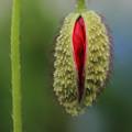写真: 一つ目植物
