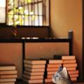 写真: 猫の視点
