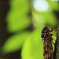 写真: 大木の樹液