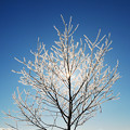 Photos: 冬の華