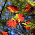 Photos: 鍋平高原の紅葉 3