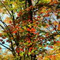 Photos: 鍋平高原の紅葉 2