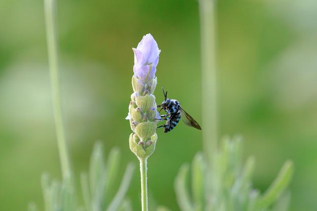 幸せを呼ぶ青い蜂 3