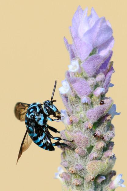 幸せを呼ぶ青い蜂 2