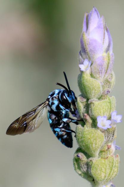 幸せを呼ぶ青い蜂 1