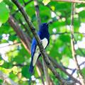Photos: 幸せの青い鳥