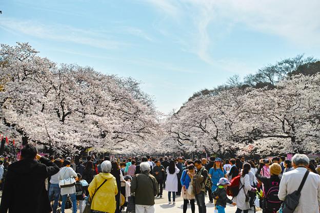 上野公園2018桜