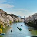 Photos: 千鳥ヶ淵2018桜
