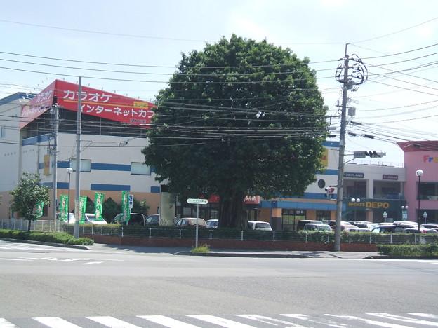 アコウの木 与次郎 鹿児島市