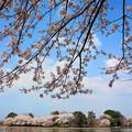 写真: 大池公園