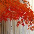 写真: メリハリの秋(蔵出し本舗より)