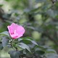 Photos: 残り花