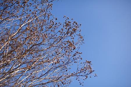 2009-02-08の空3