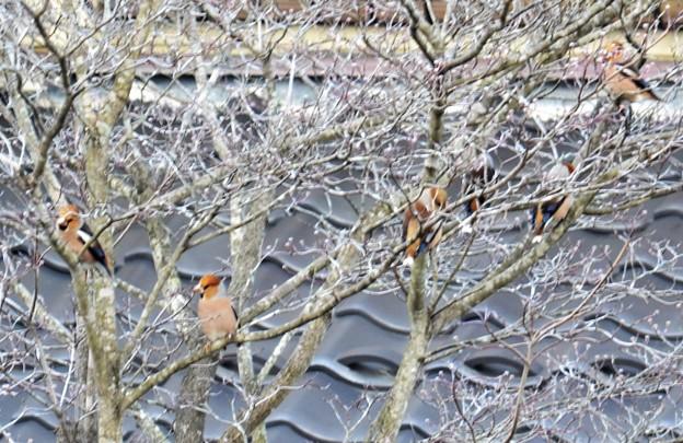 写真: 沢山素敵な小鳥さんが~