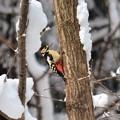 Photos: 大雪の中を・・・