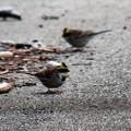 写真: 道路で食事中ですよ・・・