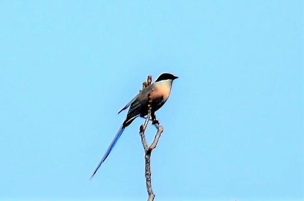 素敵な小鳥!