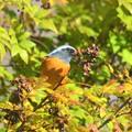 写真: 餌を食べてる小鳥さん~