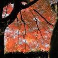 Photos: 紅い光