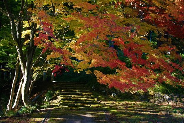 Photos: 参道を彩る