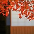 Photos: 日本の秋